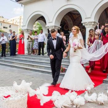 porumbei-nunta