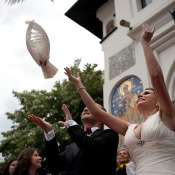 pret-porumbei-nunta